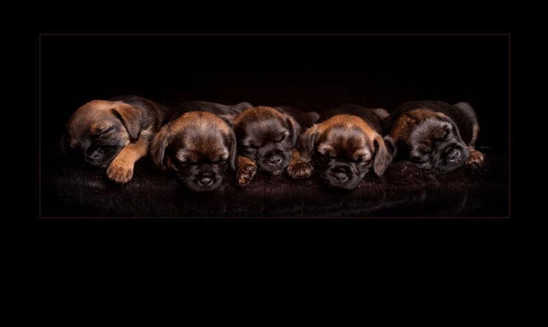 Glasgow photographers pets sleeping_puppies_swpp_gold_award