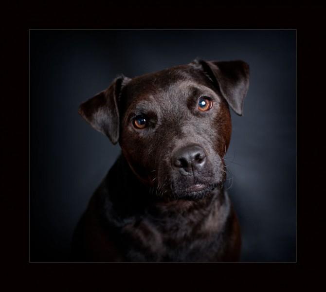 Glasgow photographers pets patterdale terrier