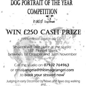 Dogs portrait of the year flyer